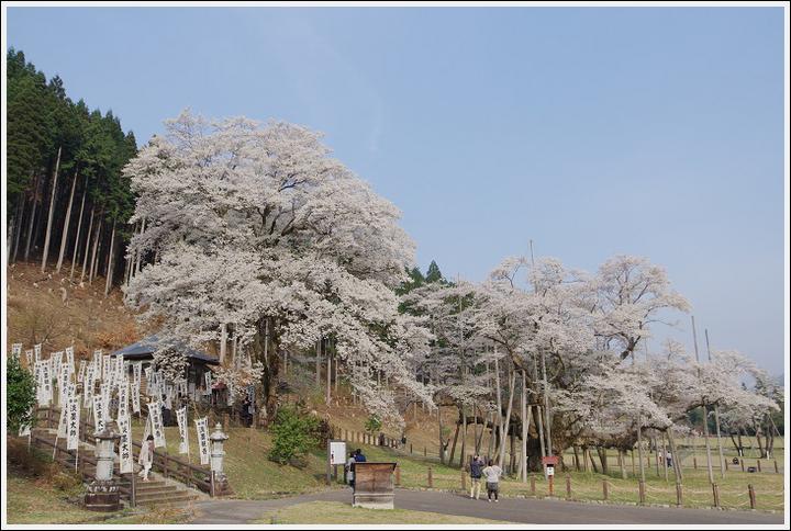 2018年4月3日 岐阜・滋賀の桜ツーリング (8)
