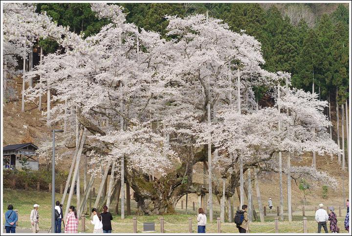 2018年4月3日 岐阜・滋賀の桜ツーリング (12)