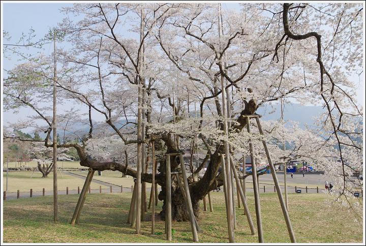 2018年4月3日 岐阜・滋賀の桜ツーリング (9)