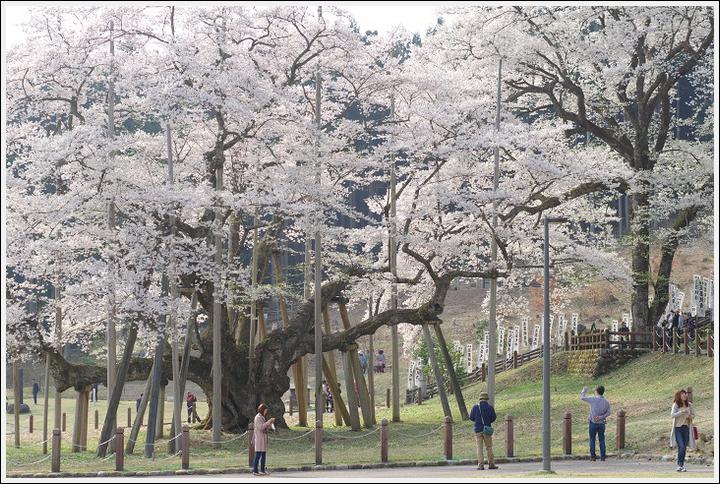 2018年4月3日 岐阜・滋賀の桜ツーリング (13)