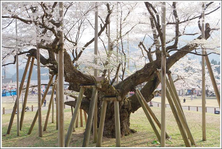 2018年4月3日 岐阜・滋賀の桜ツーリング (10)