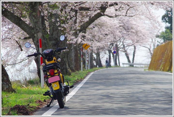2018年4月3日 岐阜・滋賀の桜ツーリング (18)