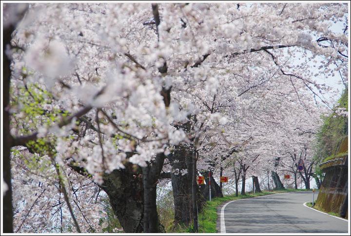 2018年4月3日 岐阜・滋賀の桜ツーリング (19)