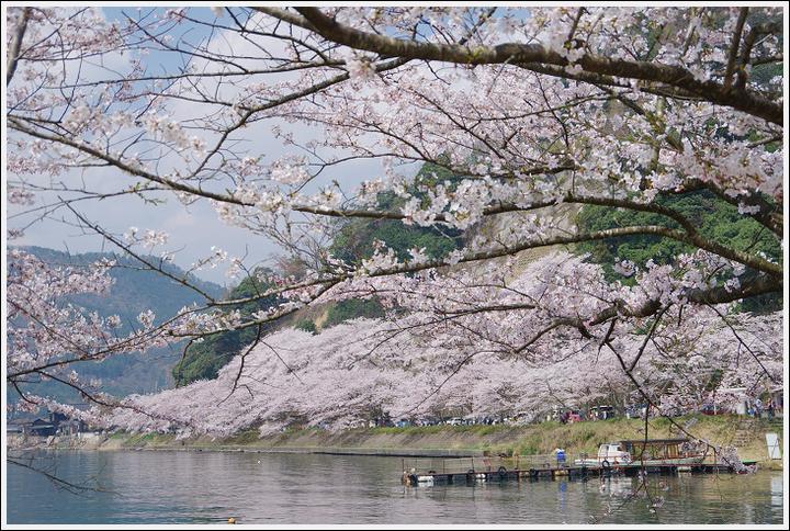2018年4月3日 岐阜・滋賀の桜ツーリング (22)