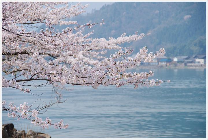 2018年4月3日 岐阜・滋賀の桜ツーリング (24)