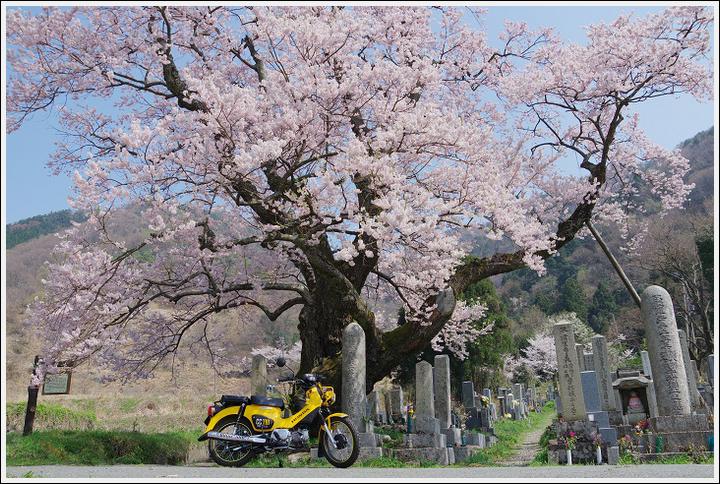 2018年4月3日 岐阜・滋賀の桜ツーリング (25)