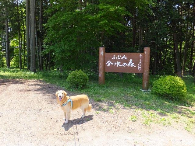 犬のマイボーム腺腫 002