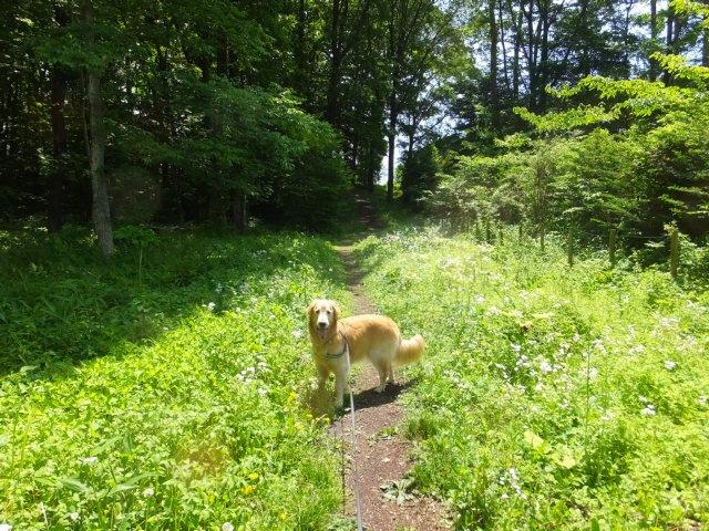 犬のマイボーム腺腫 003