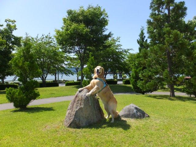 犬のマイボーム腺腫 004