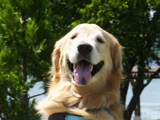 犬のマイボーム腺腫 005