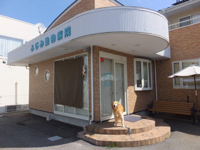犬のマイボーム腺腫 016