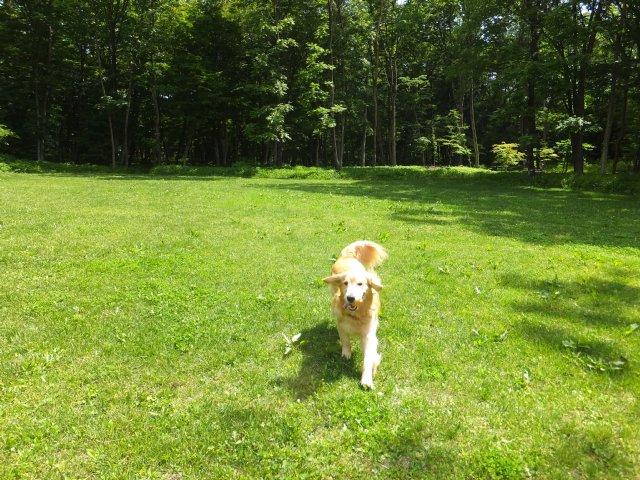 犬のマイボーム腺腫 020