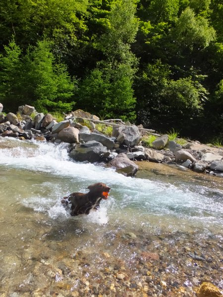 八ヶ岳渓流ロッカ&リュック2018.7.2 037
