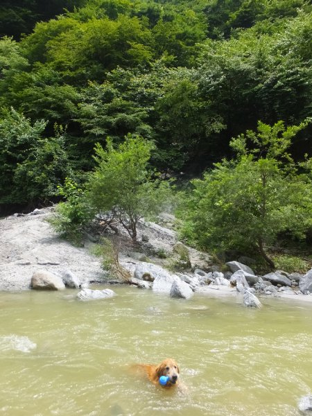 尾白川渓谷2018.7.13 043