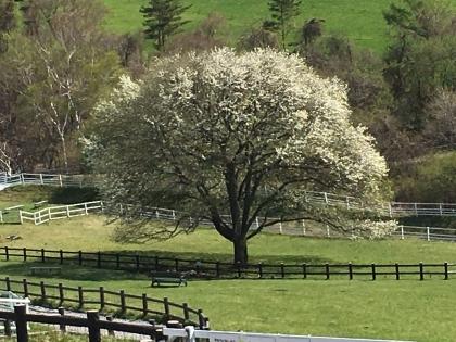 連休ヤマナシの木
