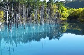 青い池 美瑛 北海道