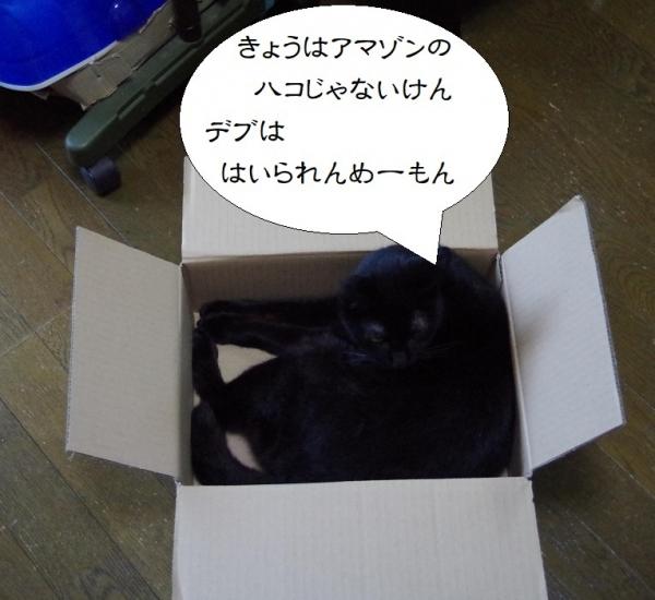 きなみちゃん