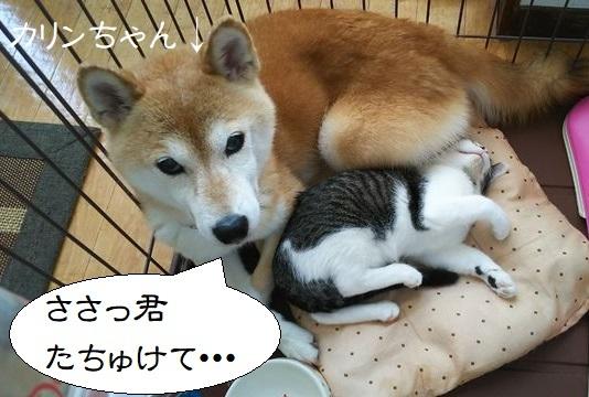 睦月しゃんちのナナちゃん 華凜ちゃん かりん カリン