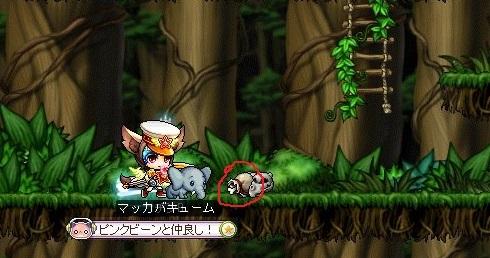 Maple_17320a.jpg