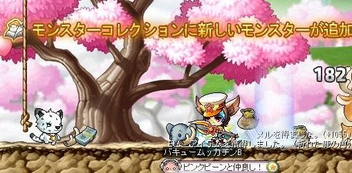 Maple_17323a.jpg