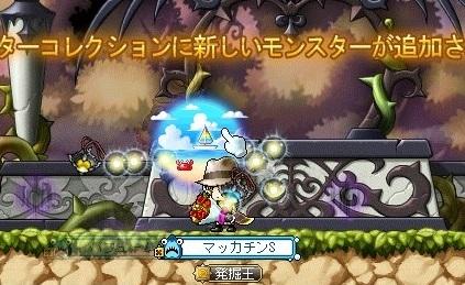 Maple_17461a.jpg