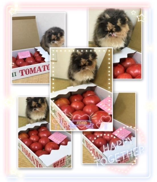 伊丹トマト