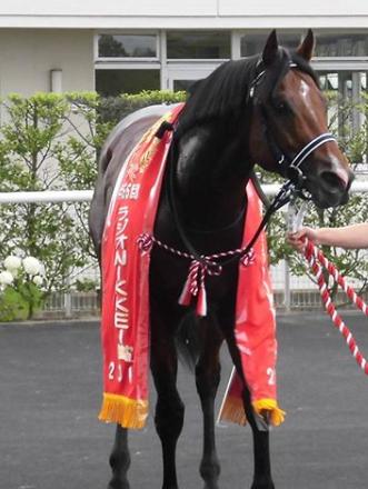 20180627manbaken-horse.png