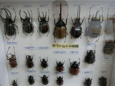 tsuyama156.jpg
