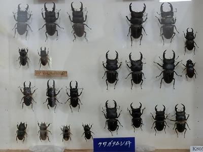 tsuyama158.jpg