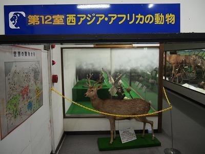 tsuyama203.jpg