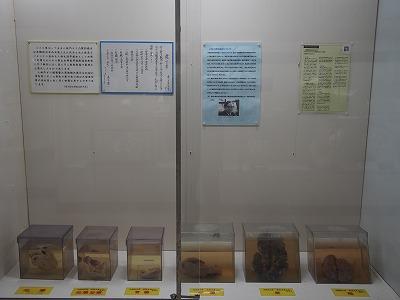 tsuyama217.jpg