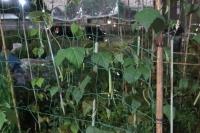 BL180708夜の菜園3IMG_6283