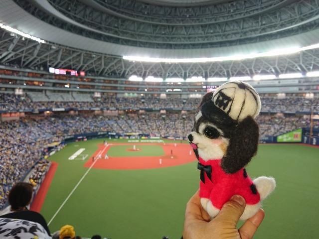 マリィと野球観戦-6
