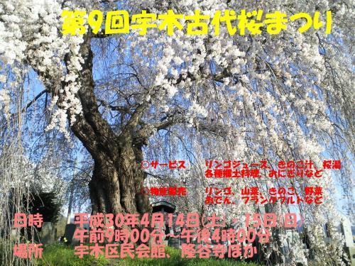 第9回古代桜まつりポスター(30.4.4)