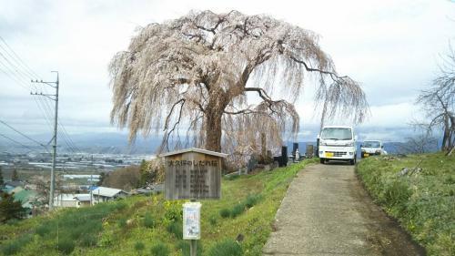 大久保のしだれ桜②2018.4.7