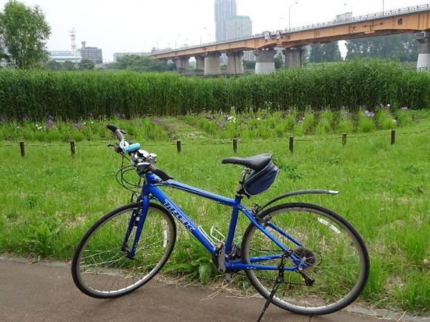 サイクリング5-29 (2)
