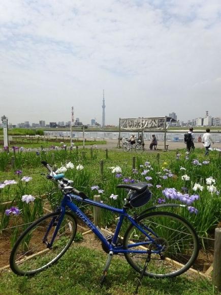 サイクリング5-29 (11)