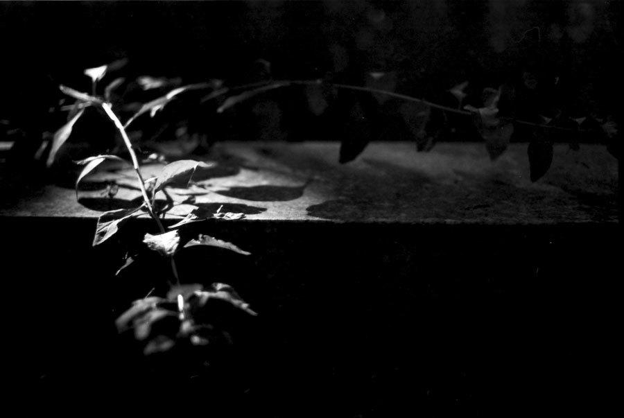 暗がりに浮かぶ枝