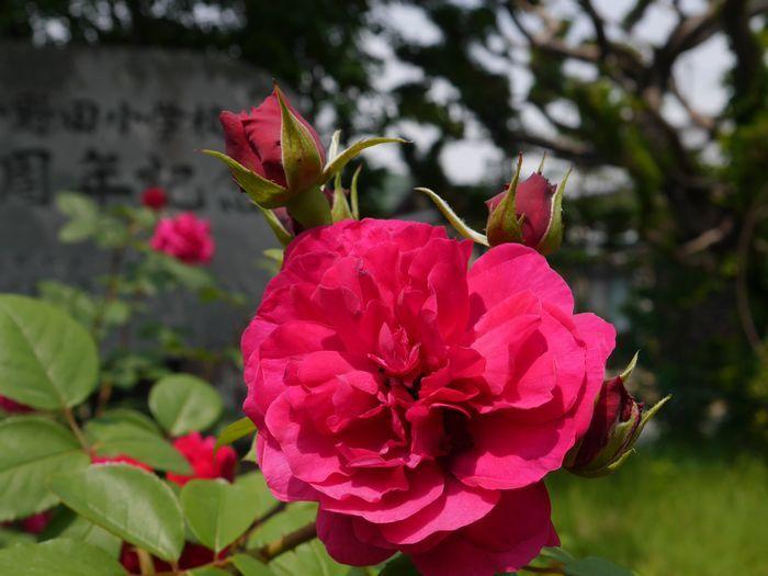 リトルカブ 英国庭園、閑谷学校 (19)