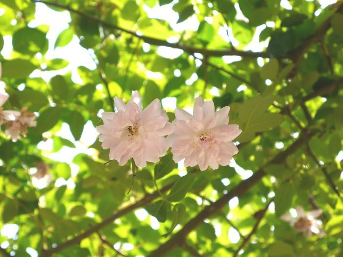 リトルカブ 英国庭園、閑谷学校 (18)