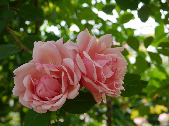 リトルカブ 英国庭園、閑谷学校 (15)