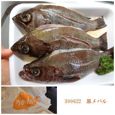 魚武622黒メバル1