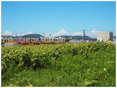仏生山ファーム1