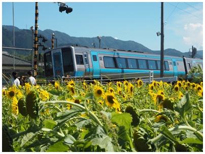 電車とひまわり1