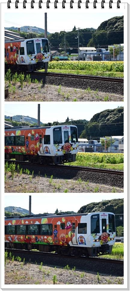 電車とひまわり234