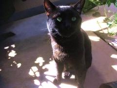 IMG_180603_1803 友人の飼い猫・ベランダでの黒猫キキちゃん_VGA