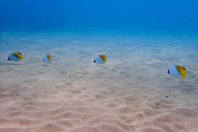 snorkel - 1 (9)