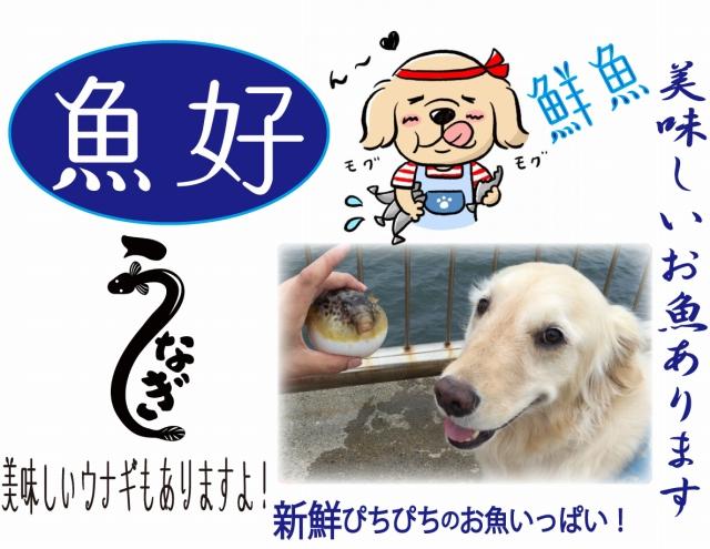 gyogyo_1-16.jpg