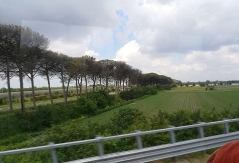 9 高速道路のバスからの景色 笠松の並木
