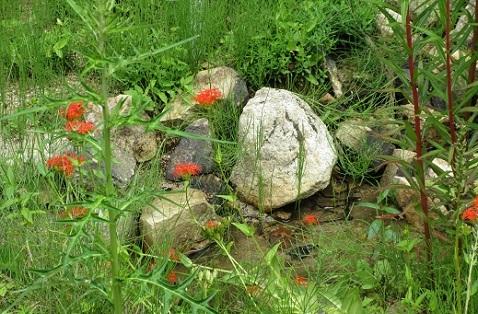 14 高山植物園